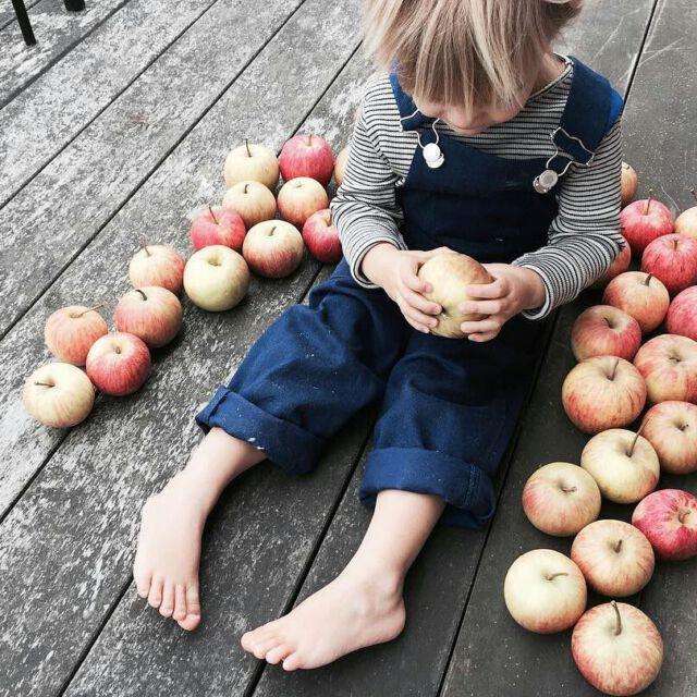 Colchik by @liliinthemoon Apples picking is going on... 🍏🍐🍂 #colchikdungaree #workwearforkids #workwearforkidsandadults #indigowear #indigodungarees #slowfashion #slowfactory #ethicalfashion #sustainablefashion #aboutcolchik #colchikgallery