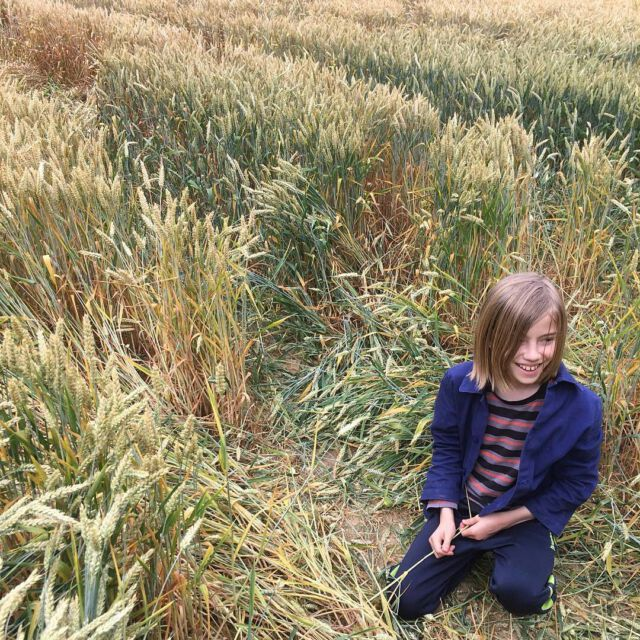 In the wheat fields 🌾🌾🌾 Our Colchik jacket looks great in any occasion. Also available for adults, on our shop: www.colchik.com Thank you @eva_lange for this picture 👌 #colchikjacket #workwear #indigo #workerjacket #workwearforkids #workwearforkidsandadults #indigolovers #indigowear #cobaltblue #cobalt #bluelovers #forkidsandadults #buyoneplantone #buylessbuybetter #slowfactory #slowfashion #uniform #schooluniform #aboutcolchik